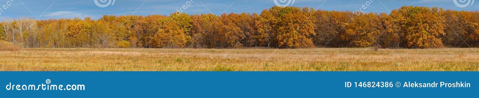 Panorama de la forêt jaune d automne devant le pré