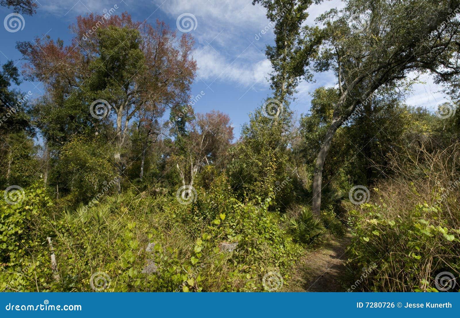 Panorama de la naturaleza