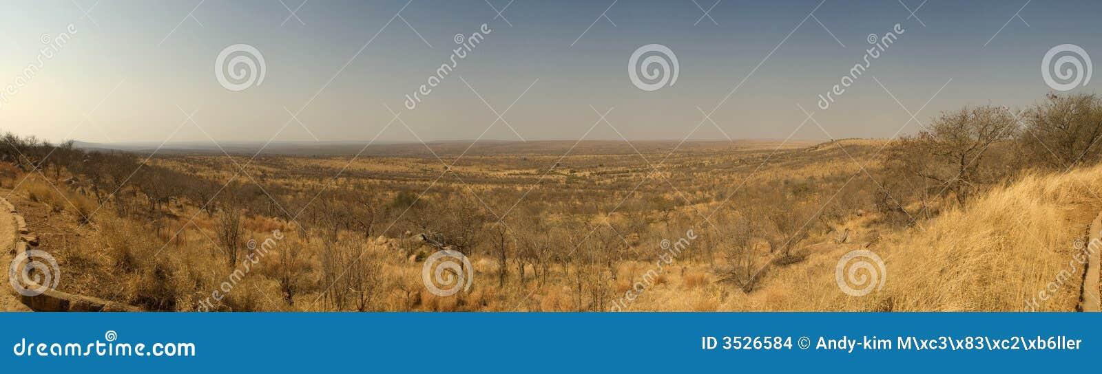 Panorama de la savane