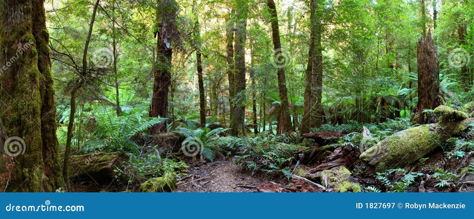 Panorama de la selva tropical