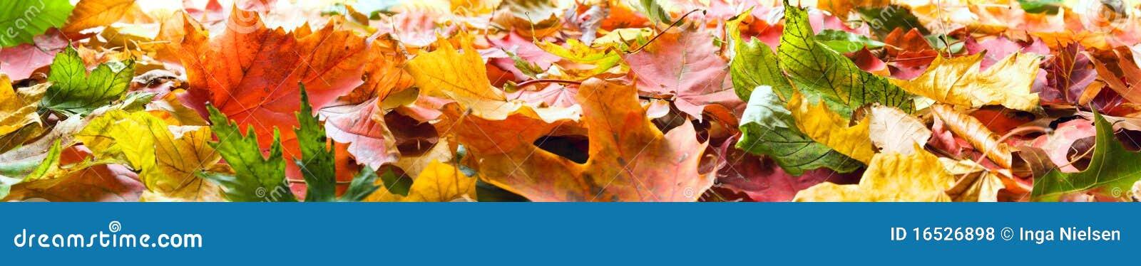 Panorama de lames d automne