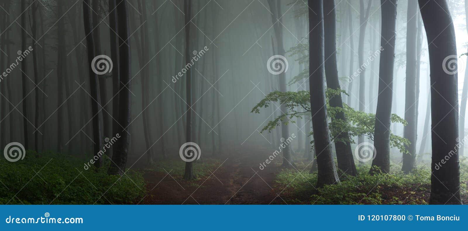 Panorama de madeiras de vista assustadores do conto de fadas nevoento da floresta no A M.