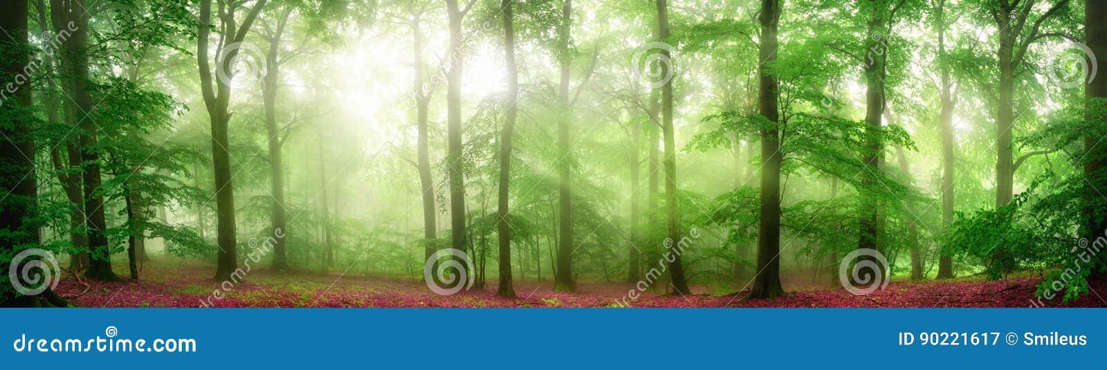 Panorama de niebla del bosque con los rayos de la luz suaves