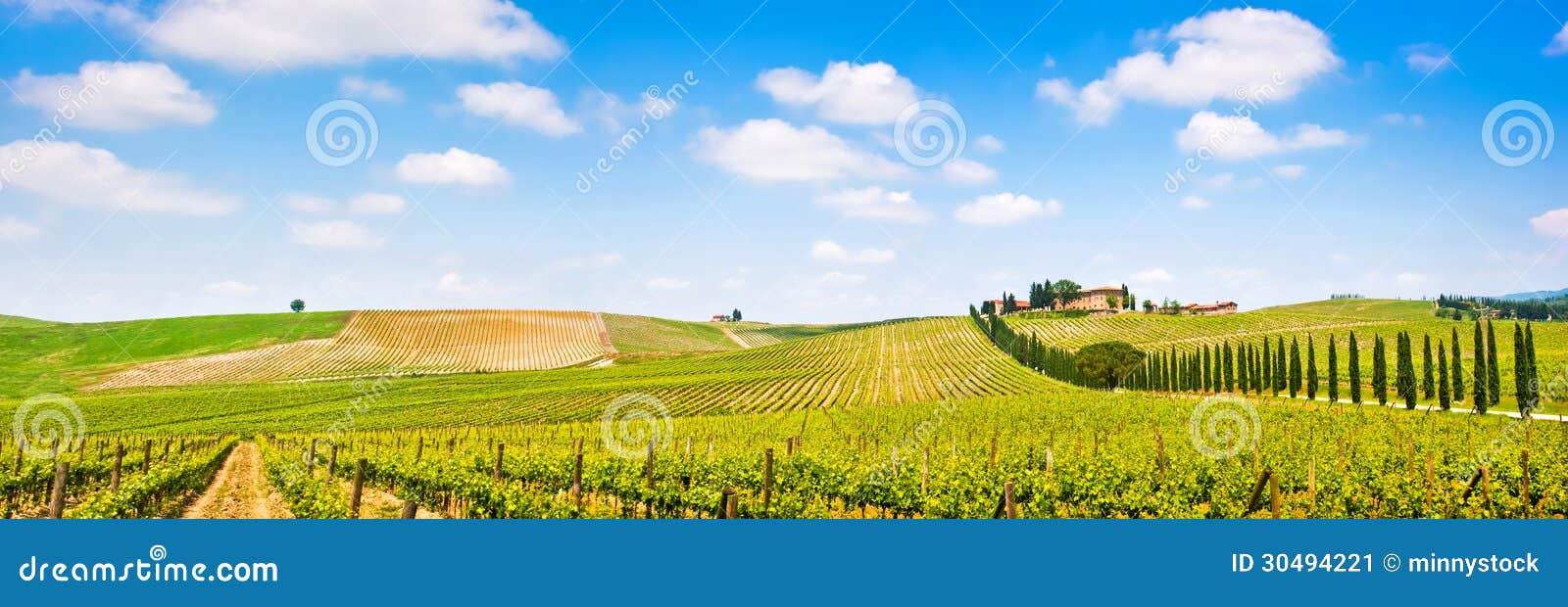 Panorama de paysage de la Toscane avec le vignoble dans la région de chianti, Toscane, Italie