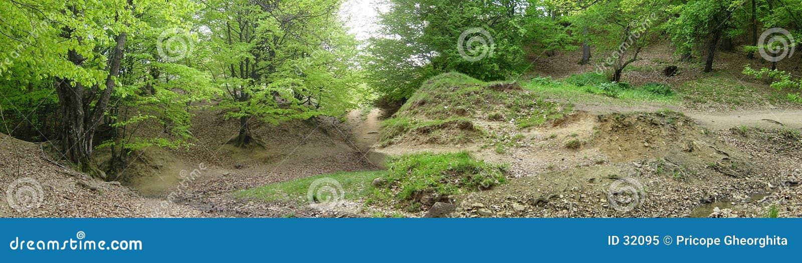 Download Panorama del bosque imagen de archivo. Imagen de madera - 32095