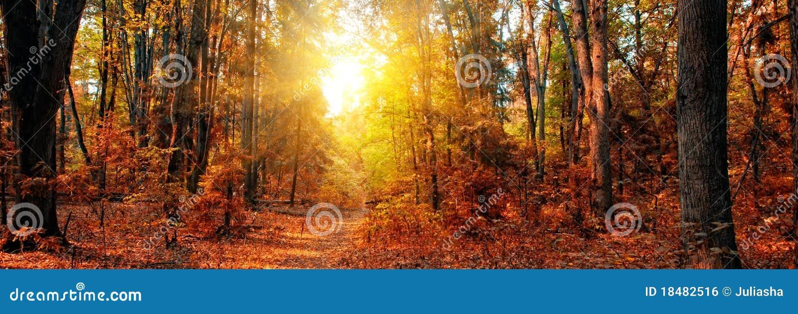 Panorama del bosque del otoño