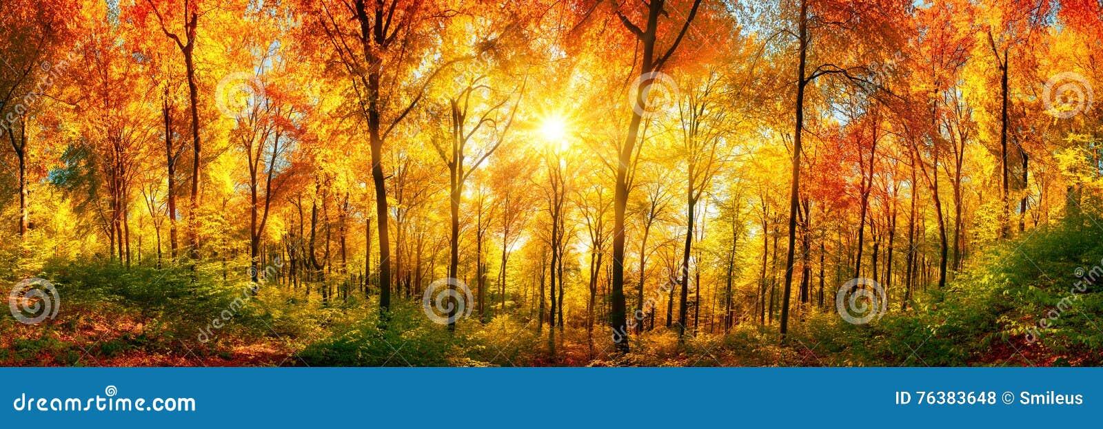 Panorama del bosque en otoño