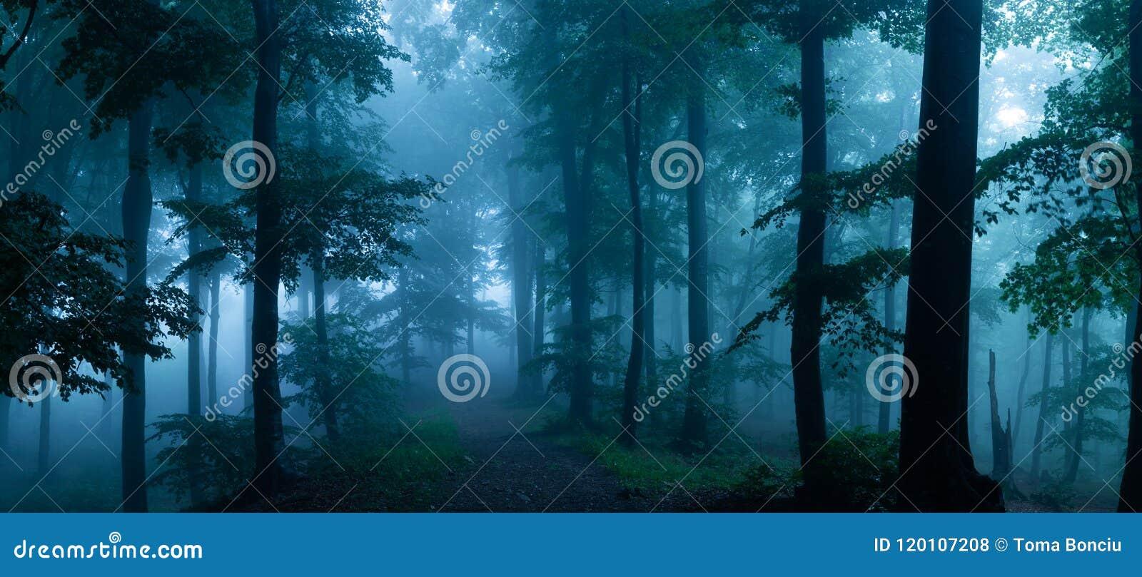 Panorama del legno di sguardo spettrale di fiaba nebbiosa della foresta dentro di mattina