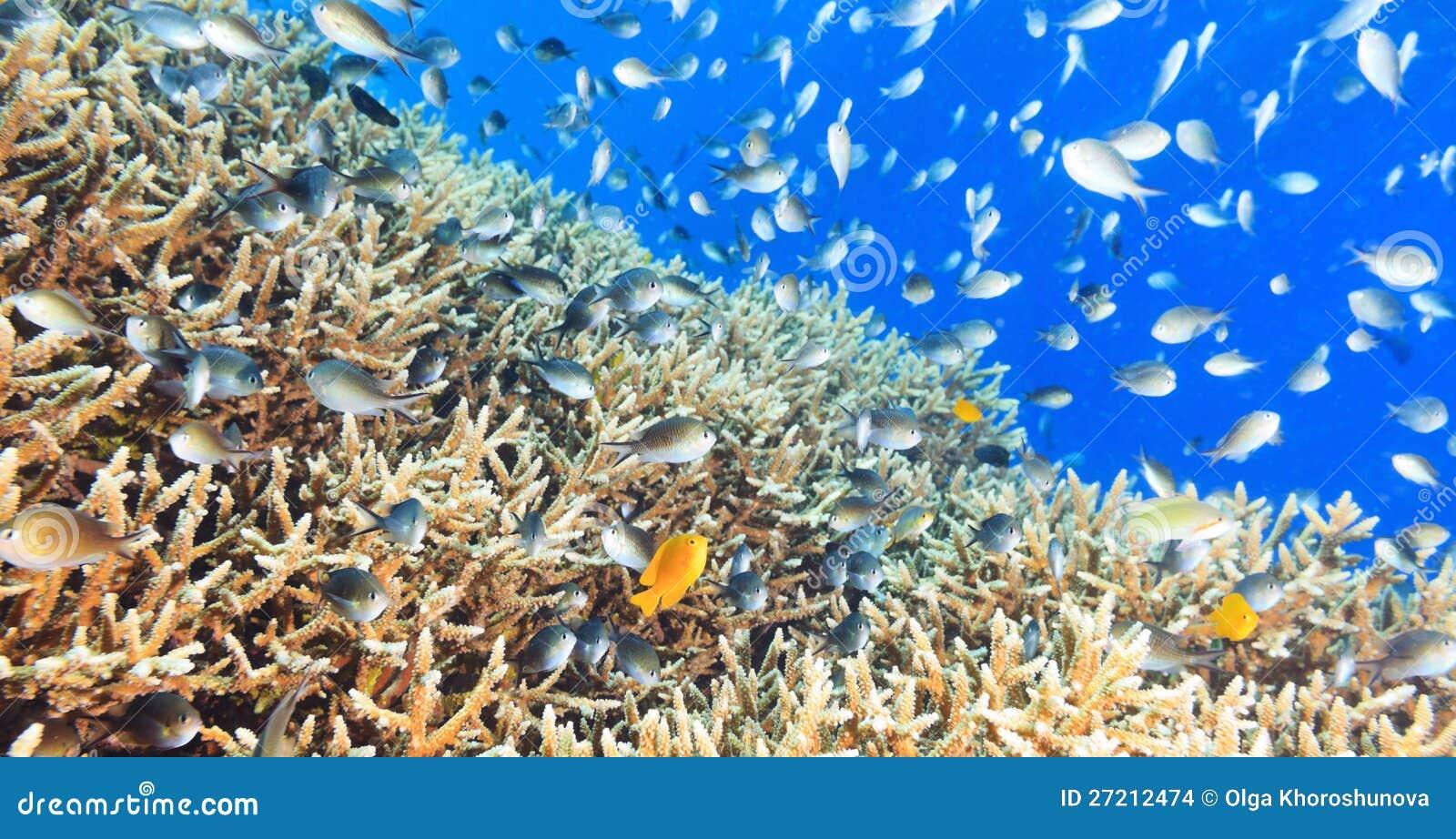 Panorama della barriera corallina