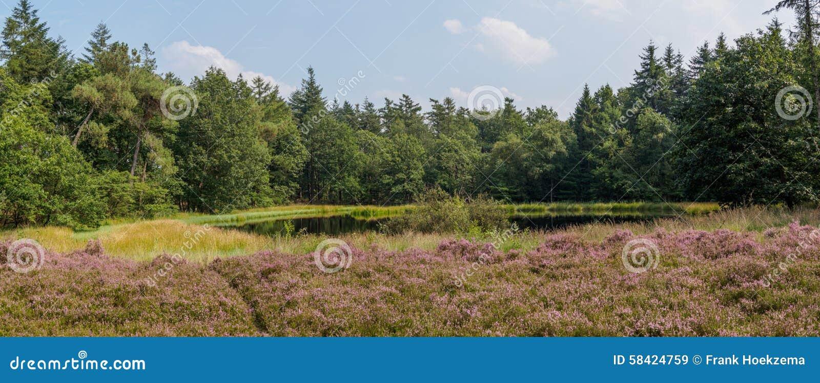 Panorama della brughiera del lago e della foresta for Planimetrie della cabina del lago