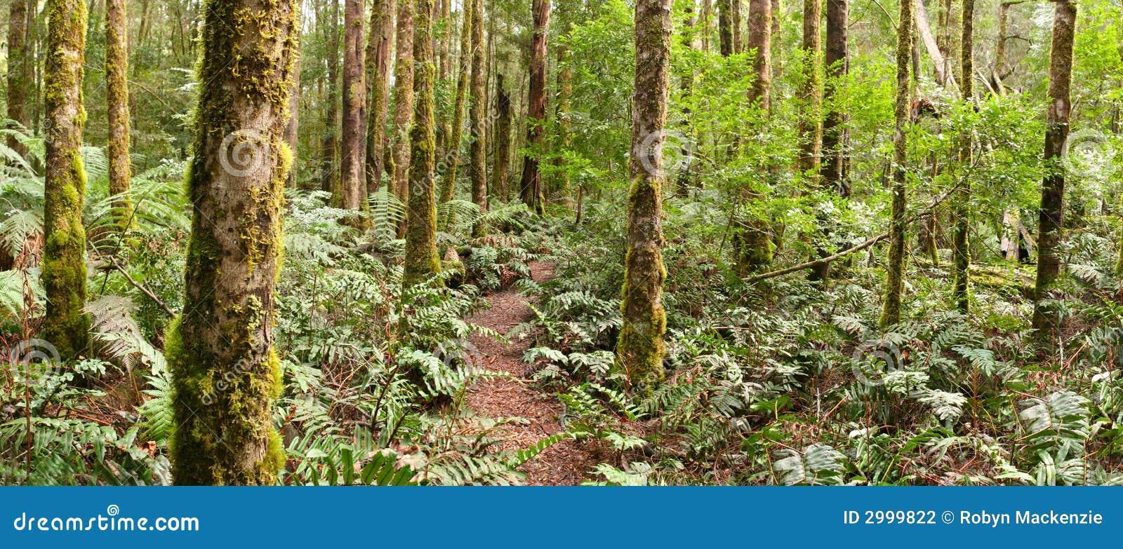 Panorama della foresta