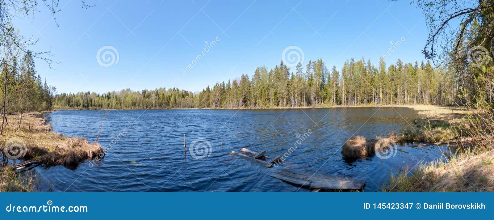 Panorama della foresta del lago