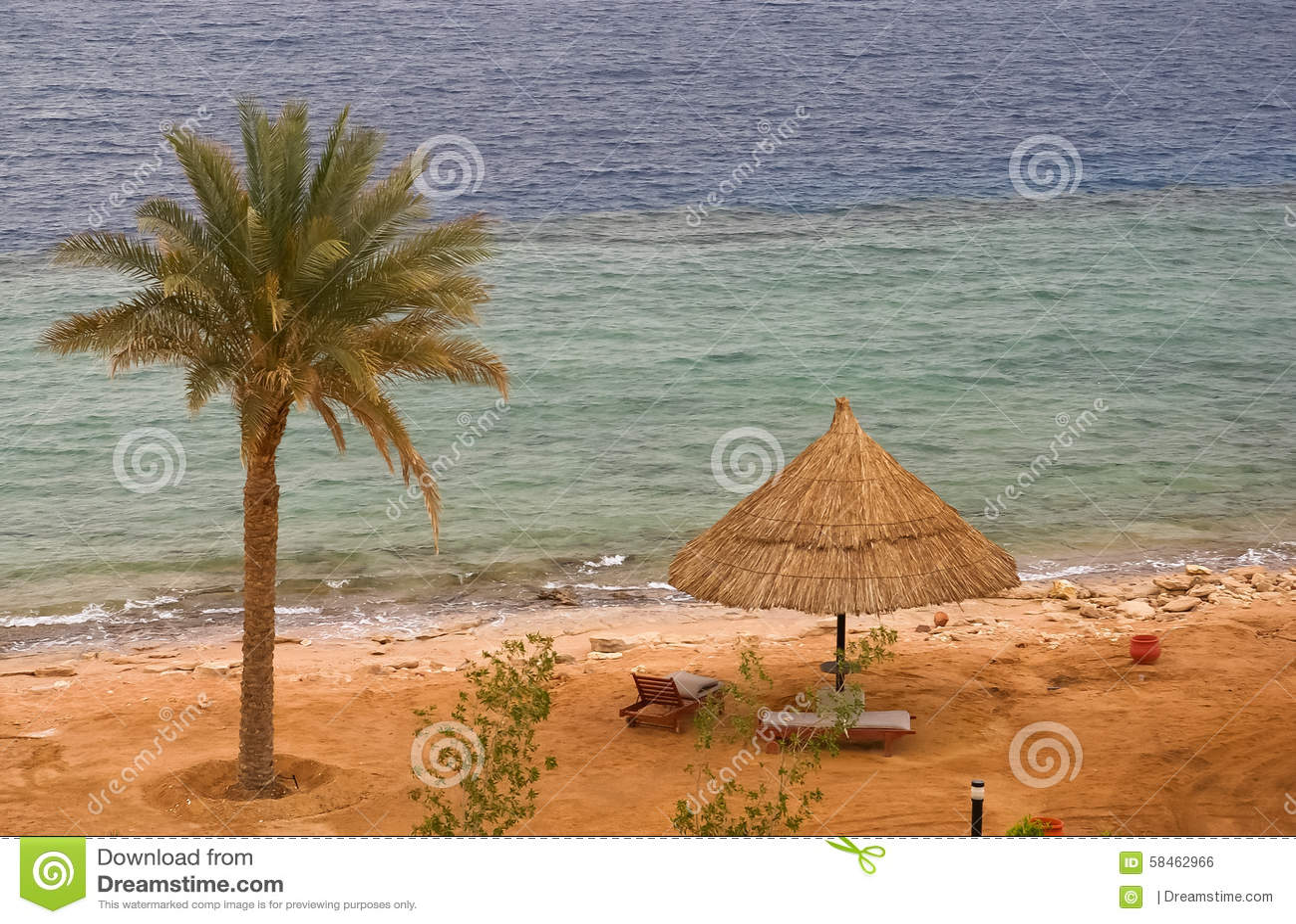 Panorama Della Spiaggia Tropicale Con Le Sedie A Sdraio E La Palma ...