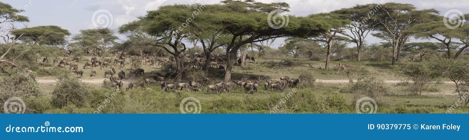 Panorama der großen Gnumigration, Serengeti