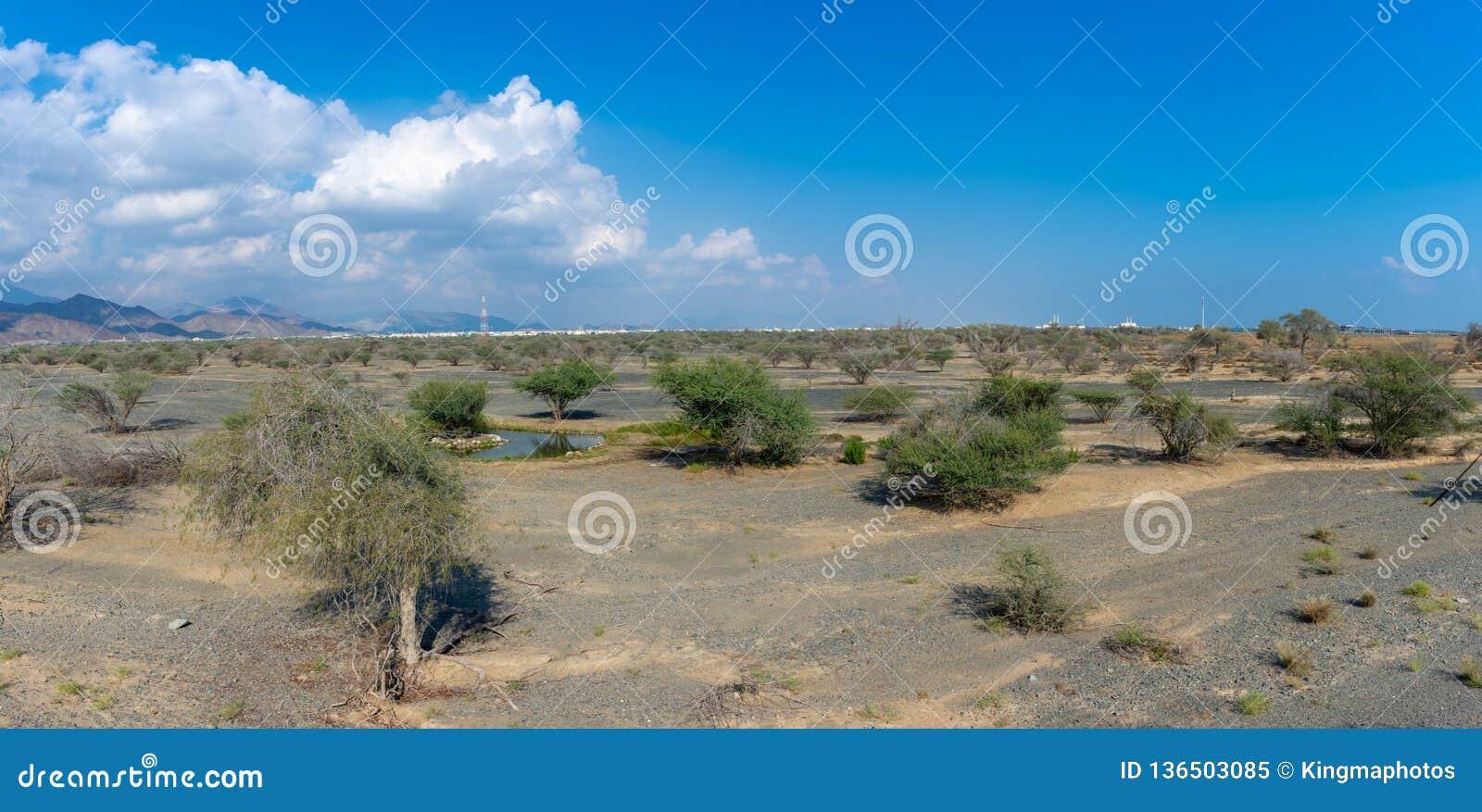 Panorama des montagnes avec quelques arbres dans le désert rocheux de la partie nord des Emirats Arabes Unis