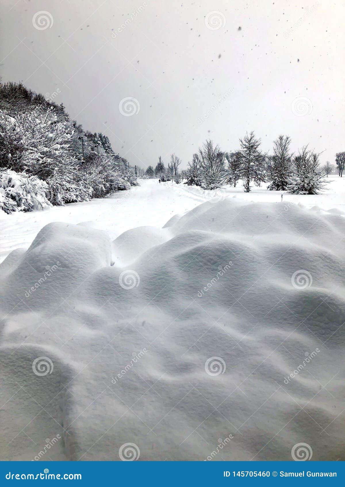 Panorama di inverno con pieno di neve