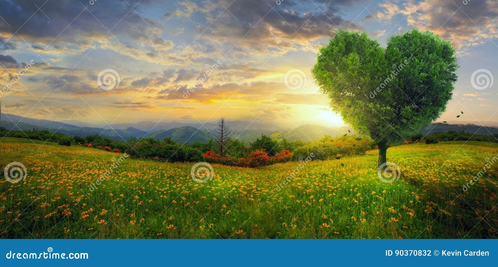 Panorama di un albero del cuore