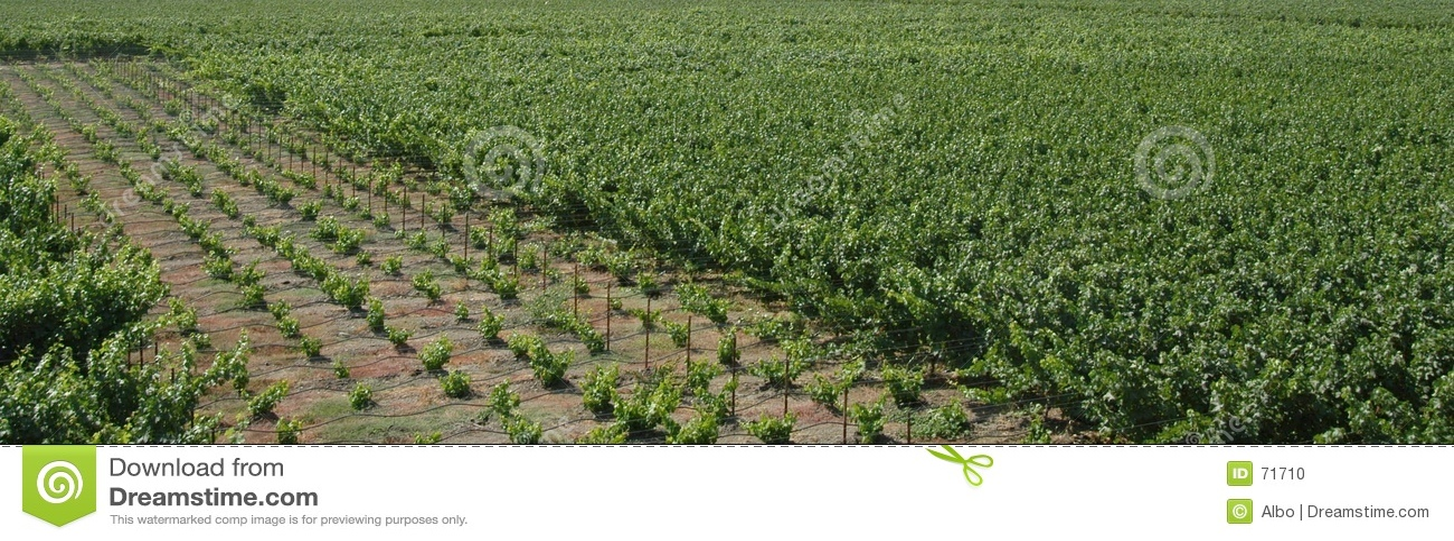 Panorama dos vinhedos