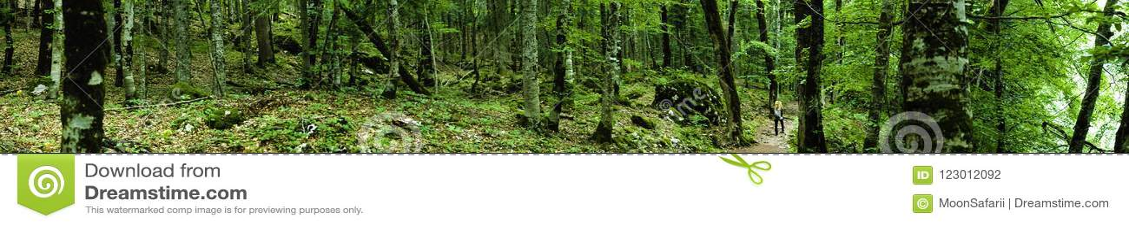 Panorama extremamente largo da floresta profunda