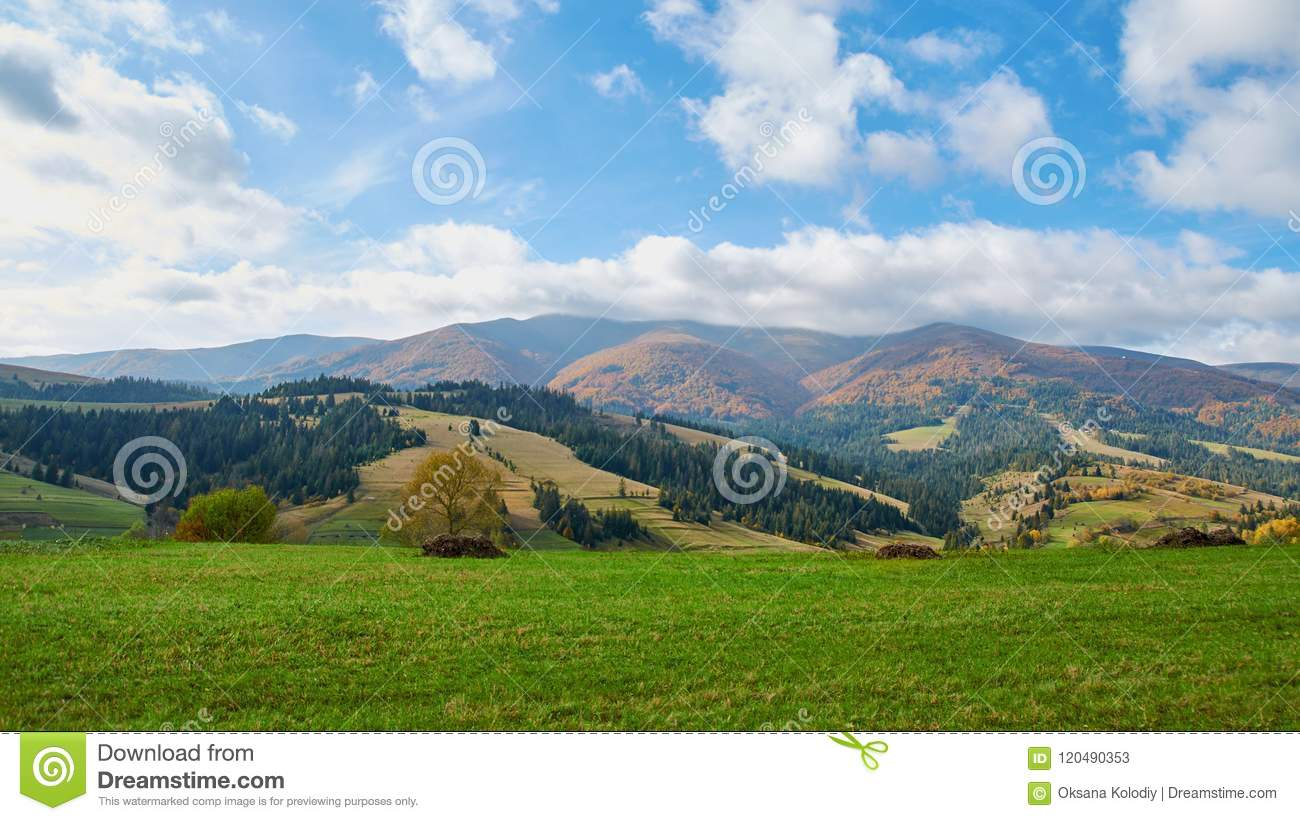 Panorama of green hills and trees in Carpathian mountains in the summer or autumn. Mountains landscape background