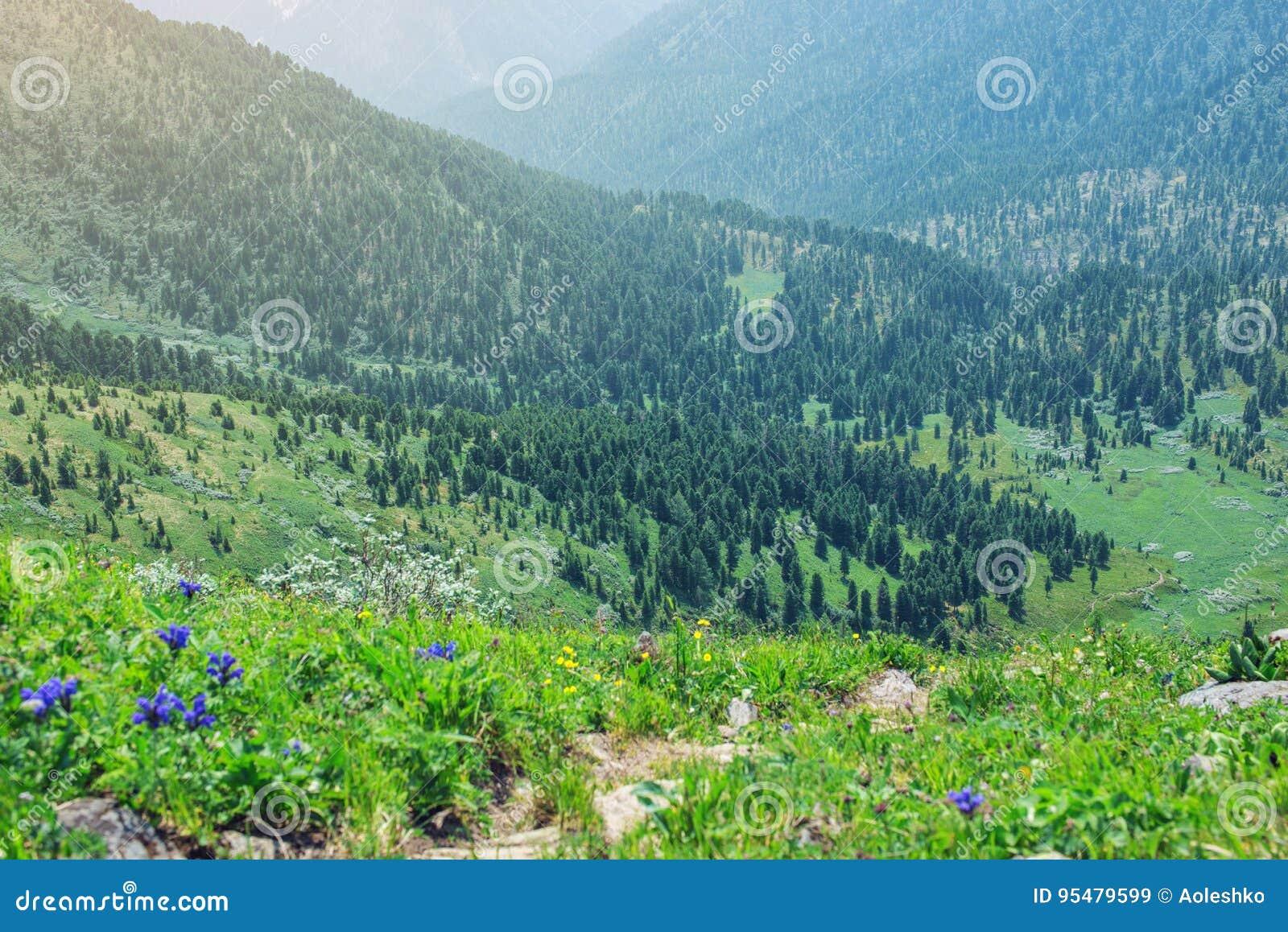 Panorama halna dolina zakrywająca z zielonym lasem w mgle