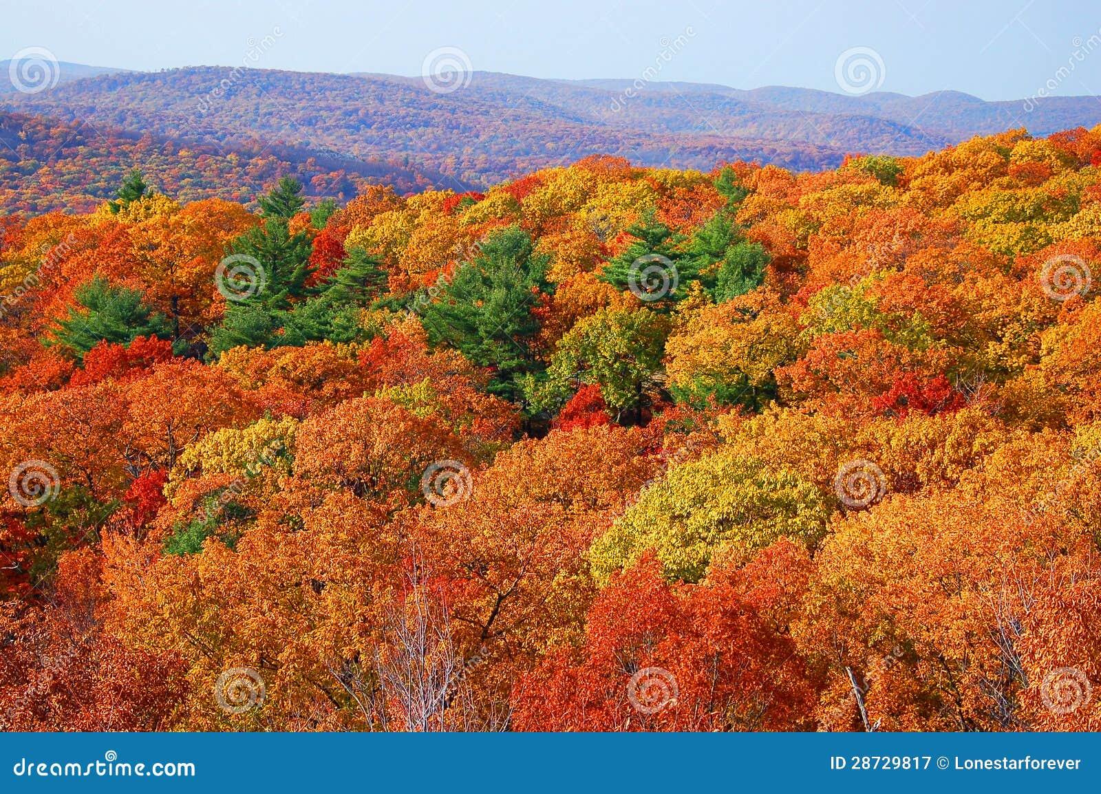 Panorama jesieni ulistnienie w niedźwiadkowej górze