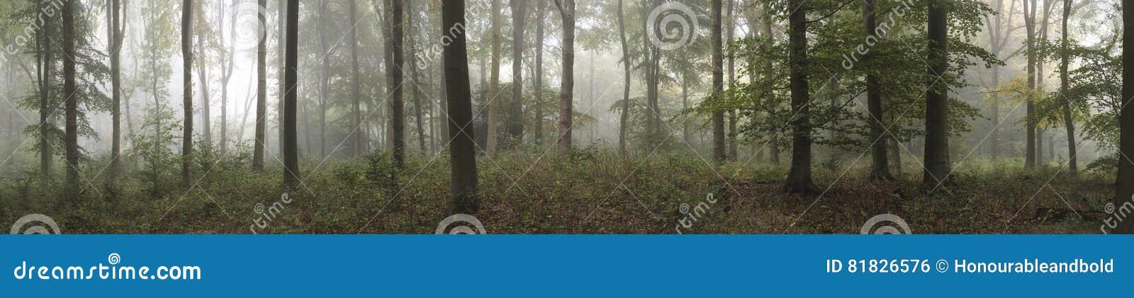 Panorama landscape image of Wendover Woods on foggy Autumn Morning.