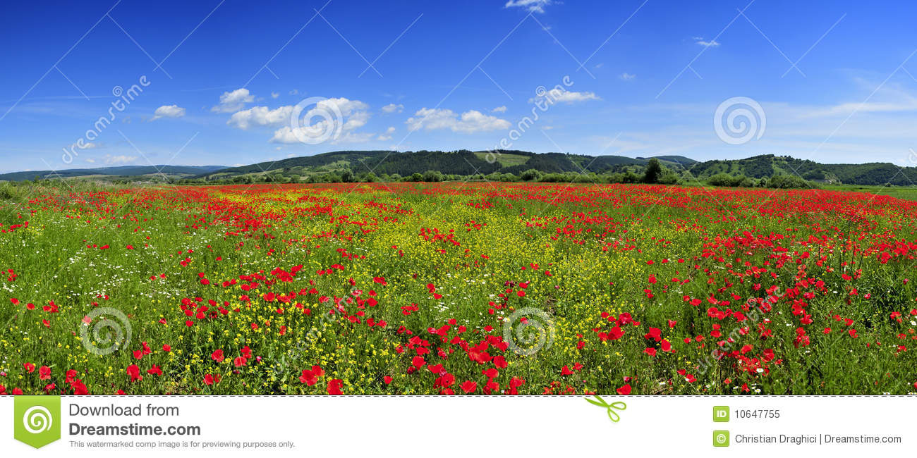 panorama landscape poppies field