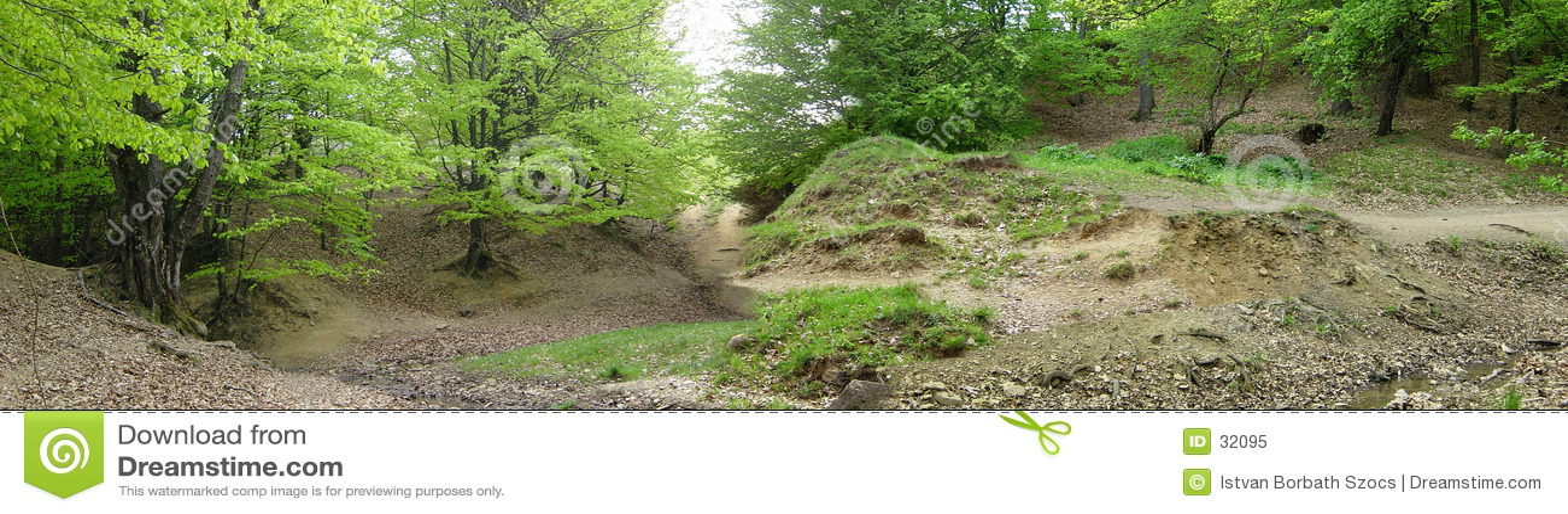 Panorama leśna