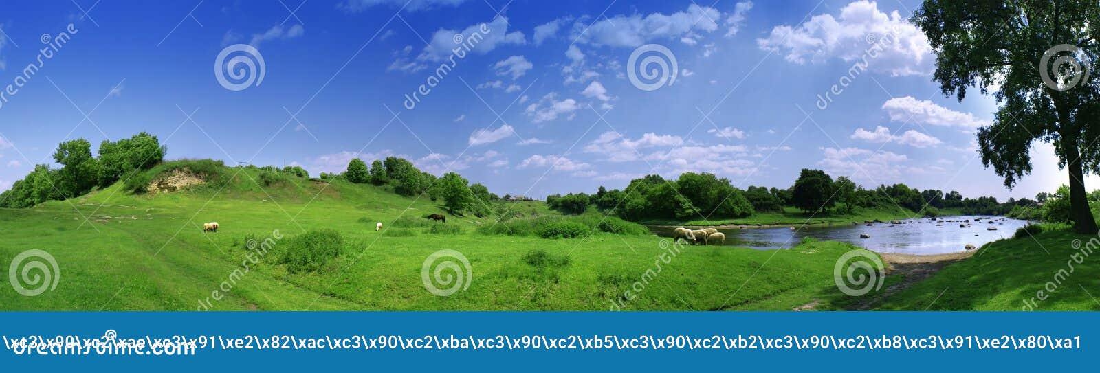 Panorama met sheeps