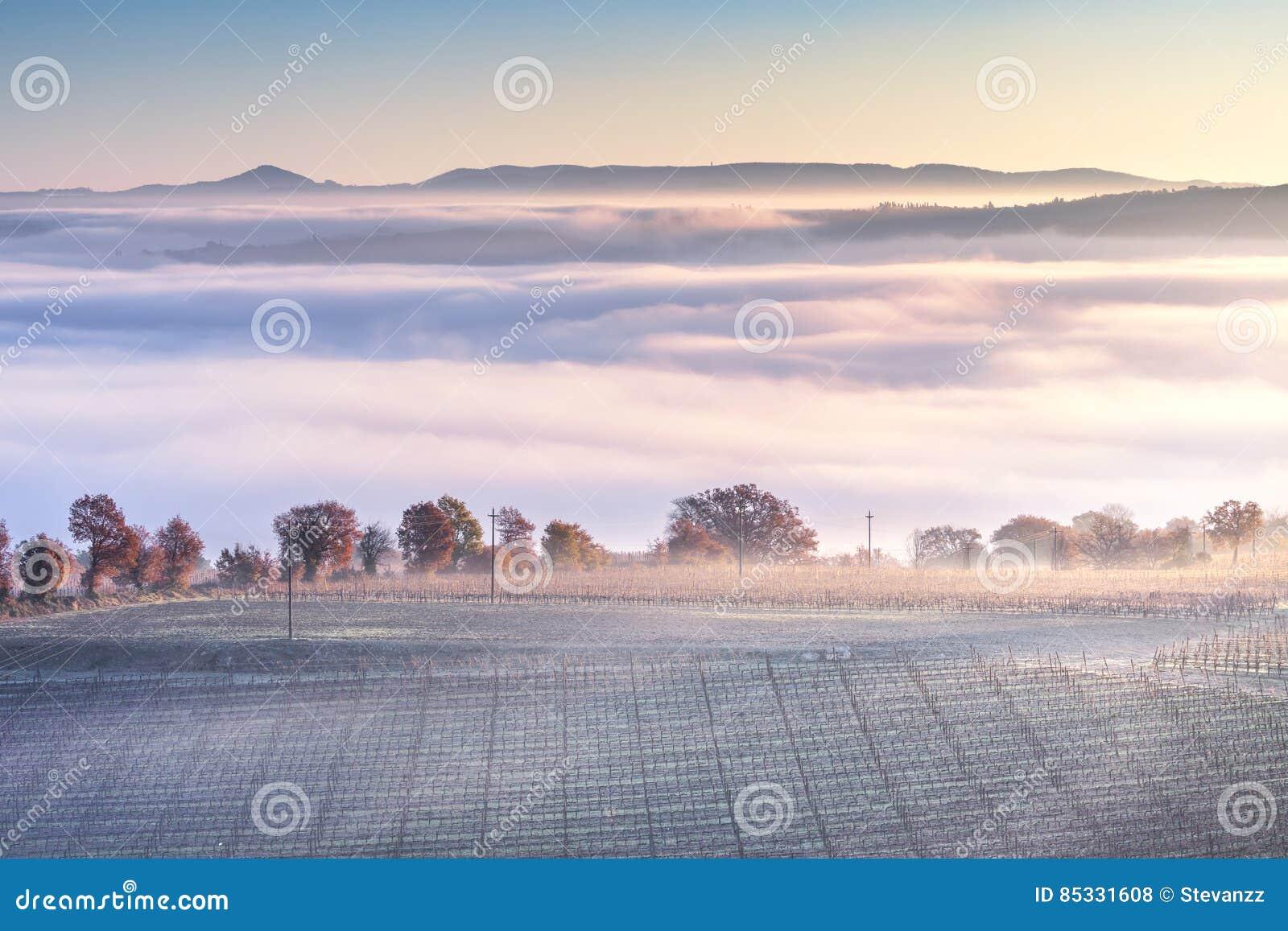 Panorama nevoento, Rolling Hills e vinhedo do inverno de Toscânia Italy