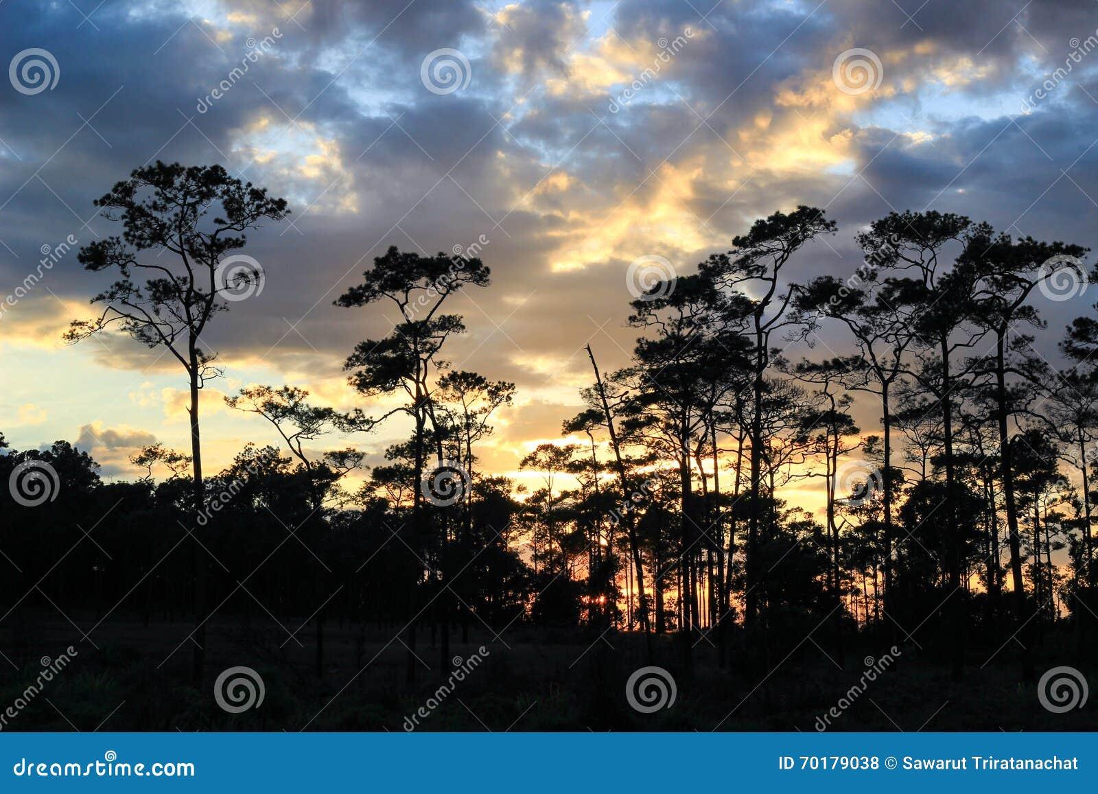 Panorama- plats av träd med solnedgångbakgrund