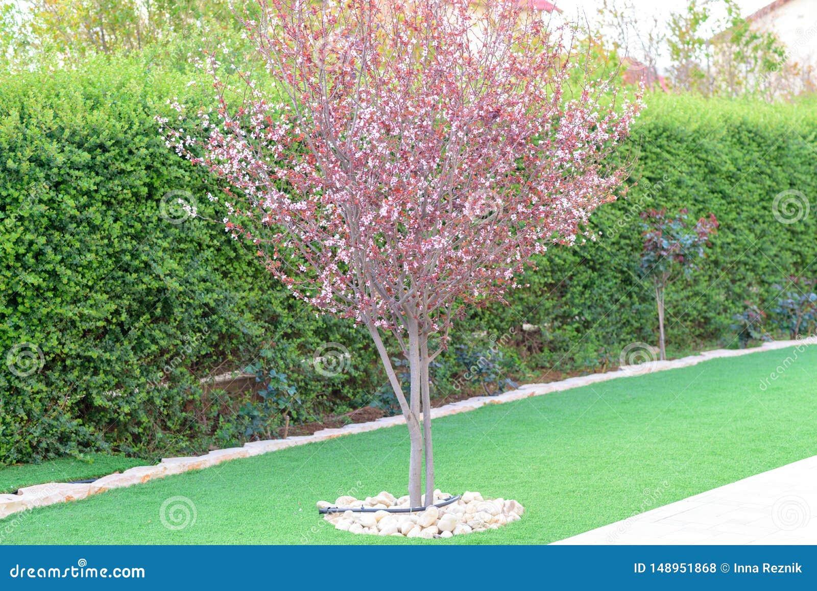 Panorama que ajardina natural en jard?n Hermosa vista del jard?n ajardinado en patio trasero