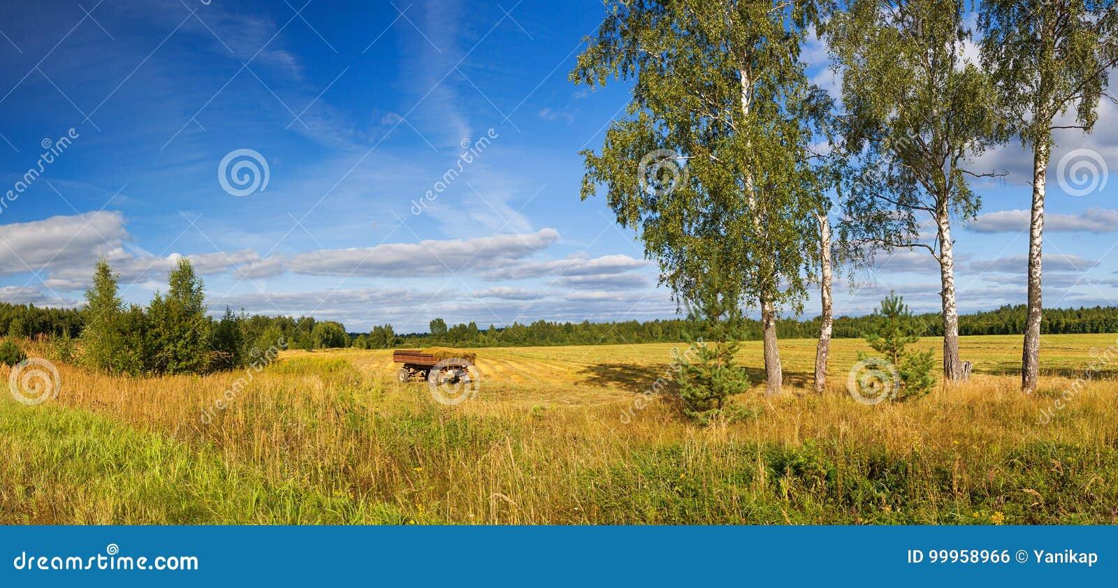 Panorama rural de paysage d automne, champ, forêt, ciel bleu et whi