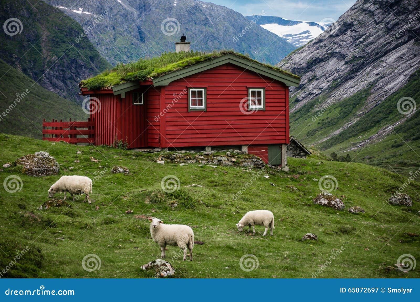 Panorama scandinavo con la casa e le pecore del grassroof for Campionare le planimetrie della casa