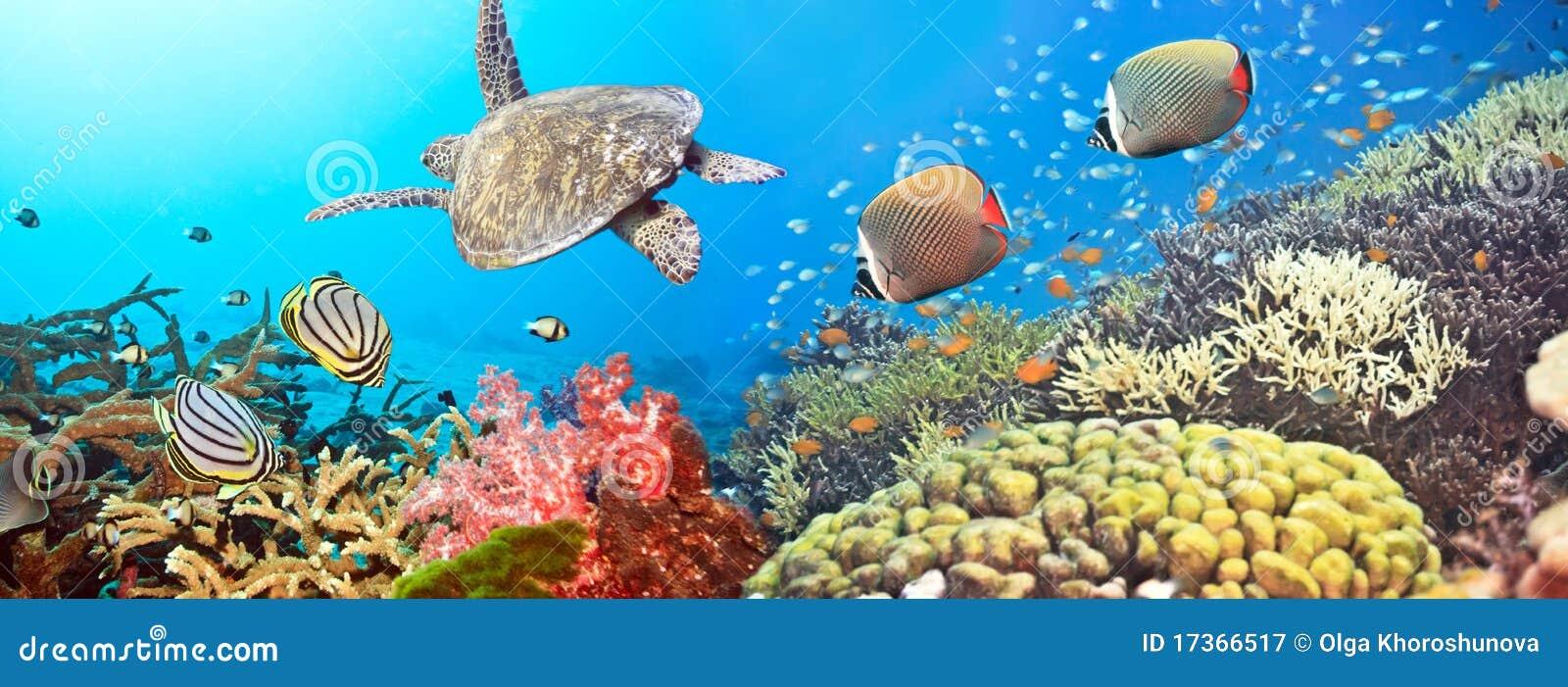 Panorama subacuático