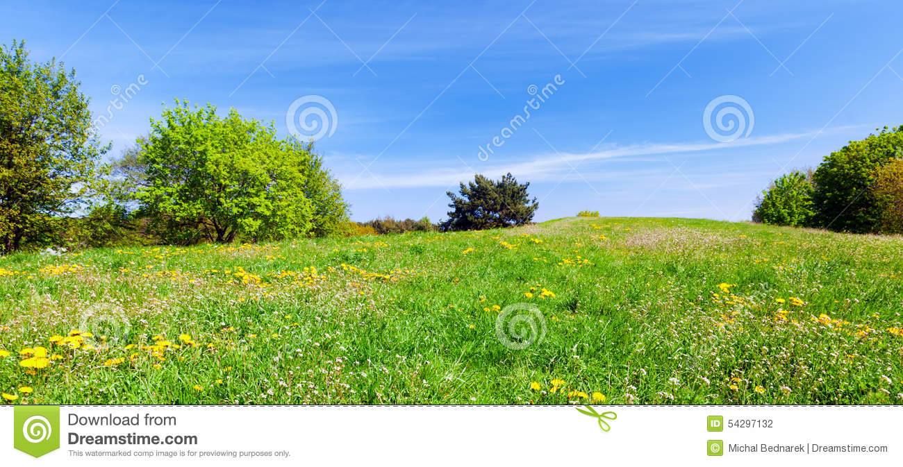 Panorama Of Summer Meadow With Green Grass, Trees And Blue ...
