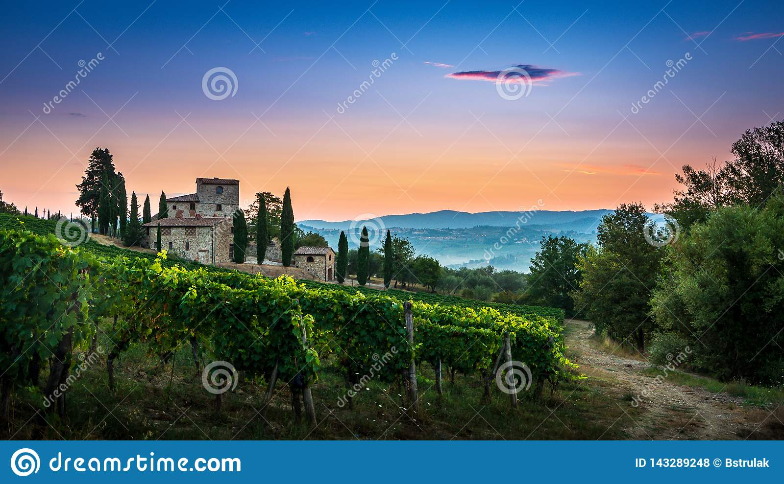 Panorama of Tuscan vineyard covered in fog at the dawn near Castellina in Chianti, Italy