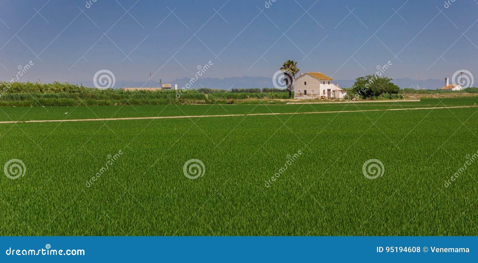Panorama van een wit huis in de padievelden van La Albufera