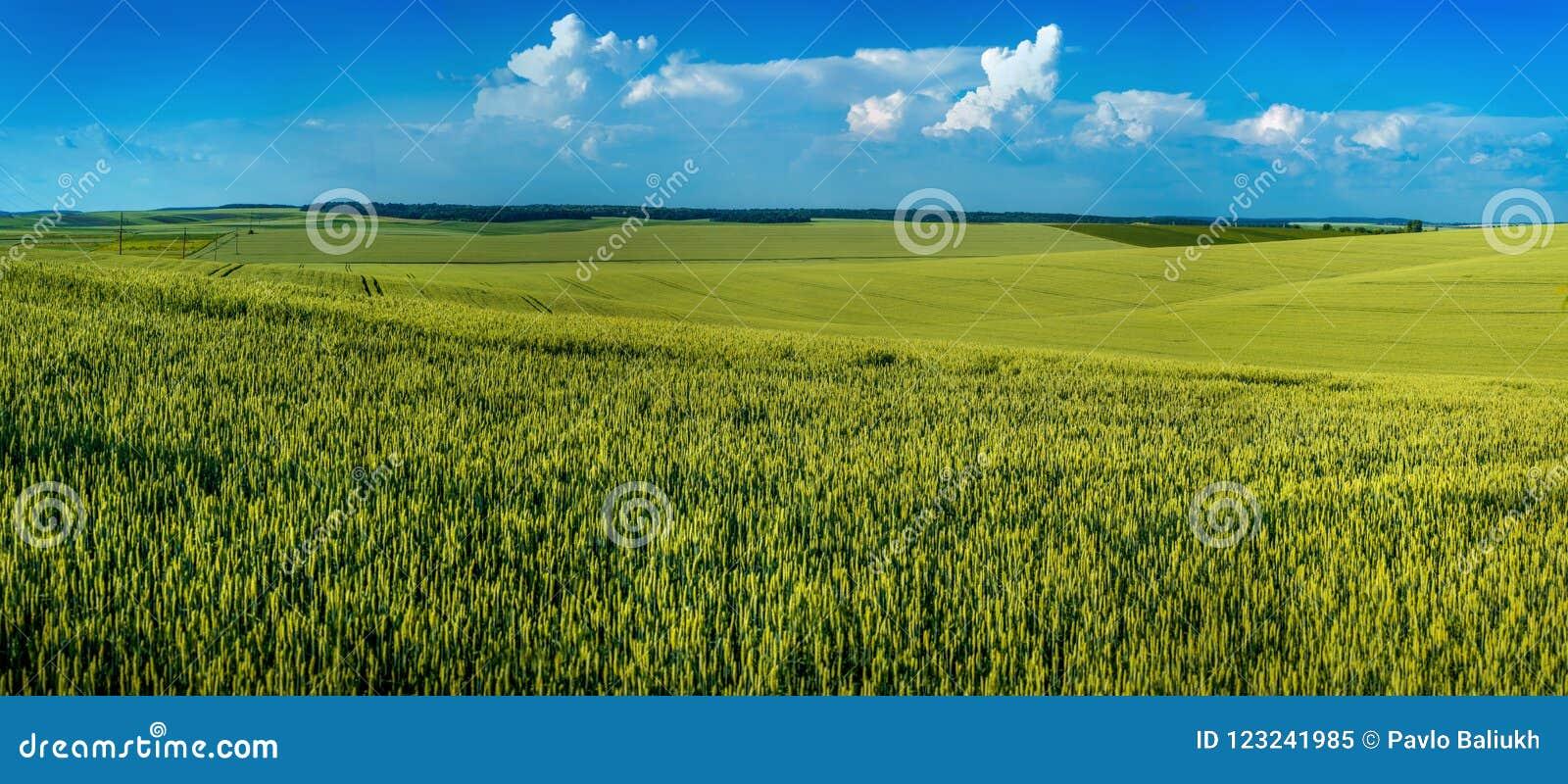 Panorama van lijnen en heuvels van graangewassen, landbouwbedrijfgebieden