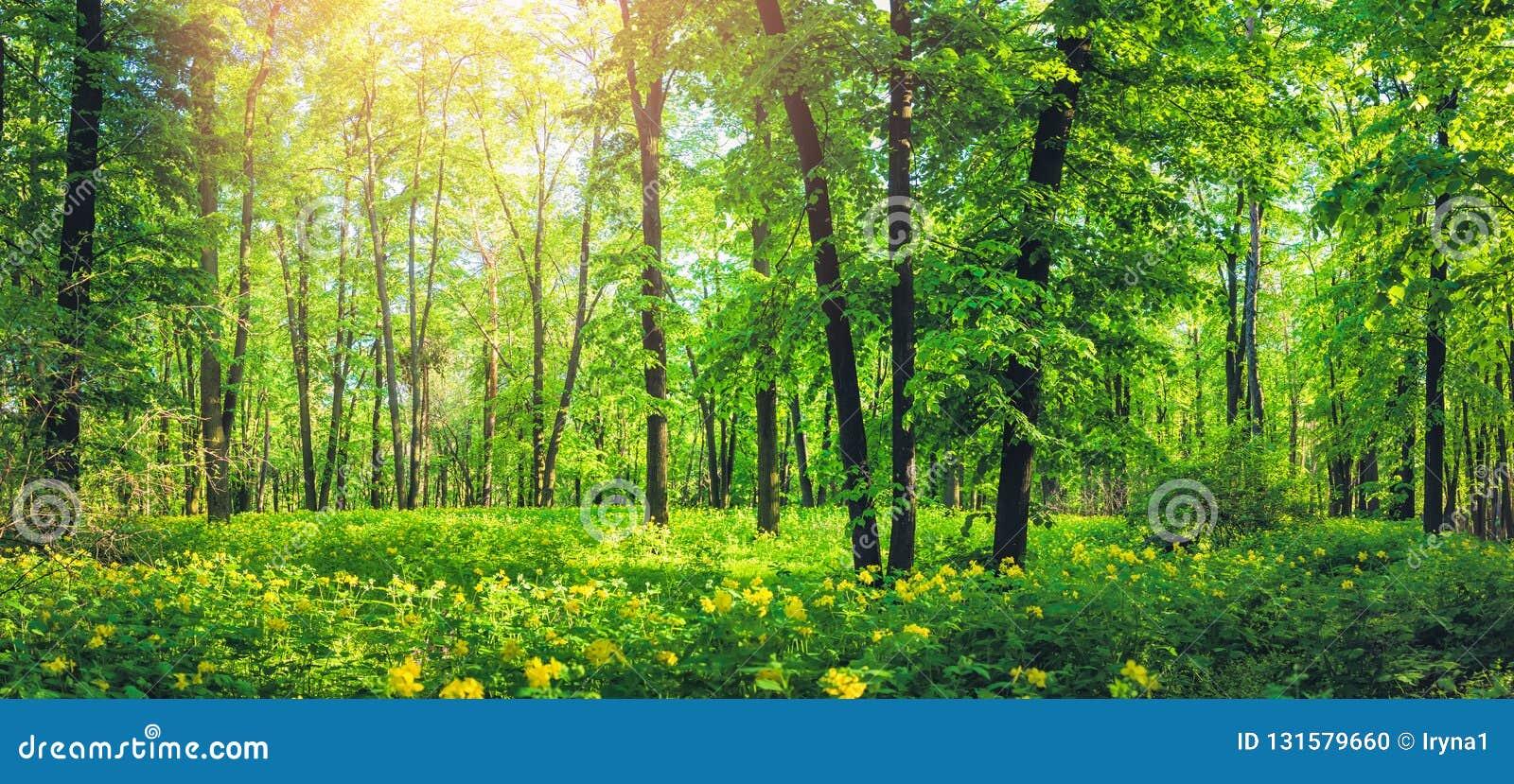 Panorama van mooi groen bos in de zomer Aardlandschap met gele wilde bloemen