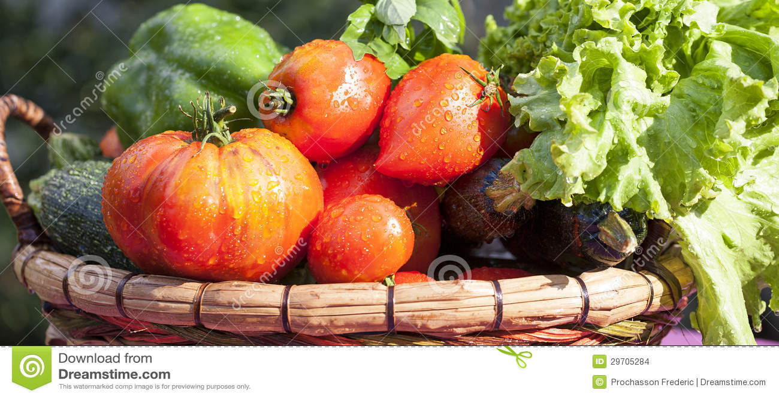 Panorama van natte groenten stock foto afbeelding for Groenten tuin