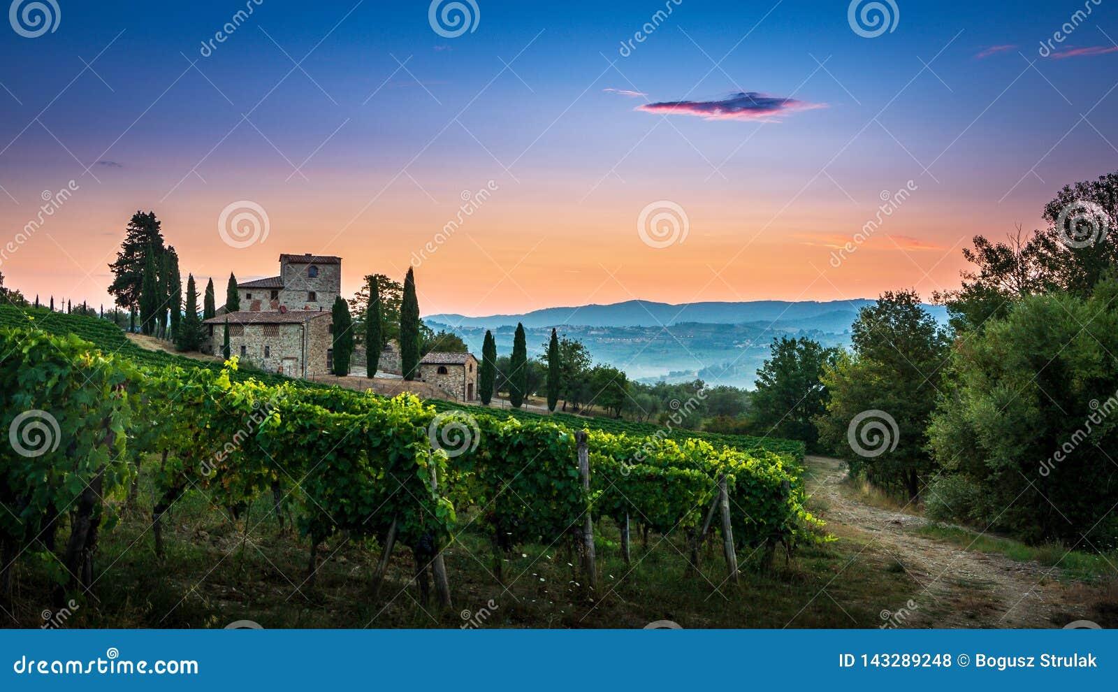 Panorama van Toscaanse die wijngaard in mist bij de dageraad dichtbij Castellina in Chianti, Italië wordt behandeld