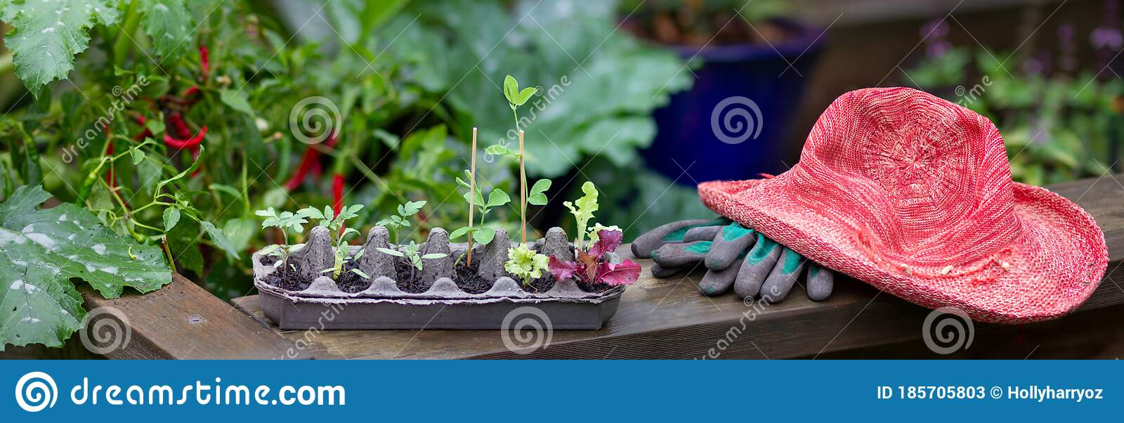 Vegetable Seedlings Growing In Reused Egg Box Outside On Raised Garden Bed Stock Image Image Of Recycle Authentic 185705803