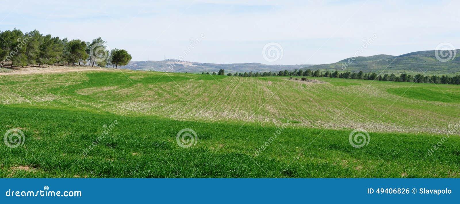 Download Panorama Von Grünfeldern Und -wiesen Im Frühjahr Stockfoto - Bild von landwirtschaftlich, outdoor: 49406826