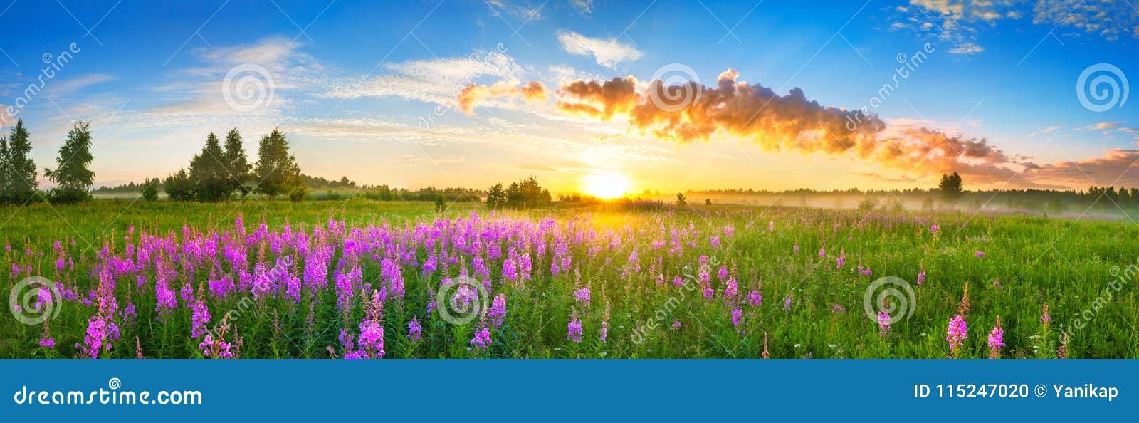 Panorama wiejski krajobraz z wschodem słońca i kwitnąć łąką