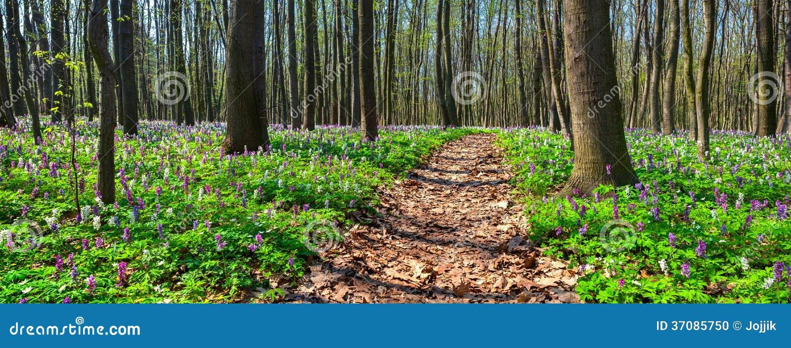 Download Panorama wiosna las. zdjęcie stock. Obraz złożonej z naturalny - 37085750