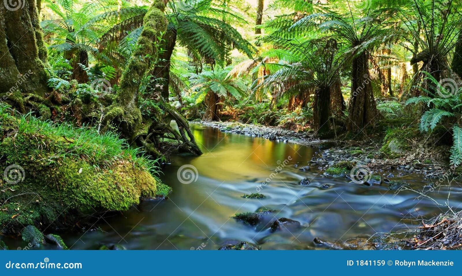 Panoramarainforestflod