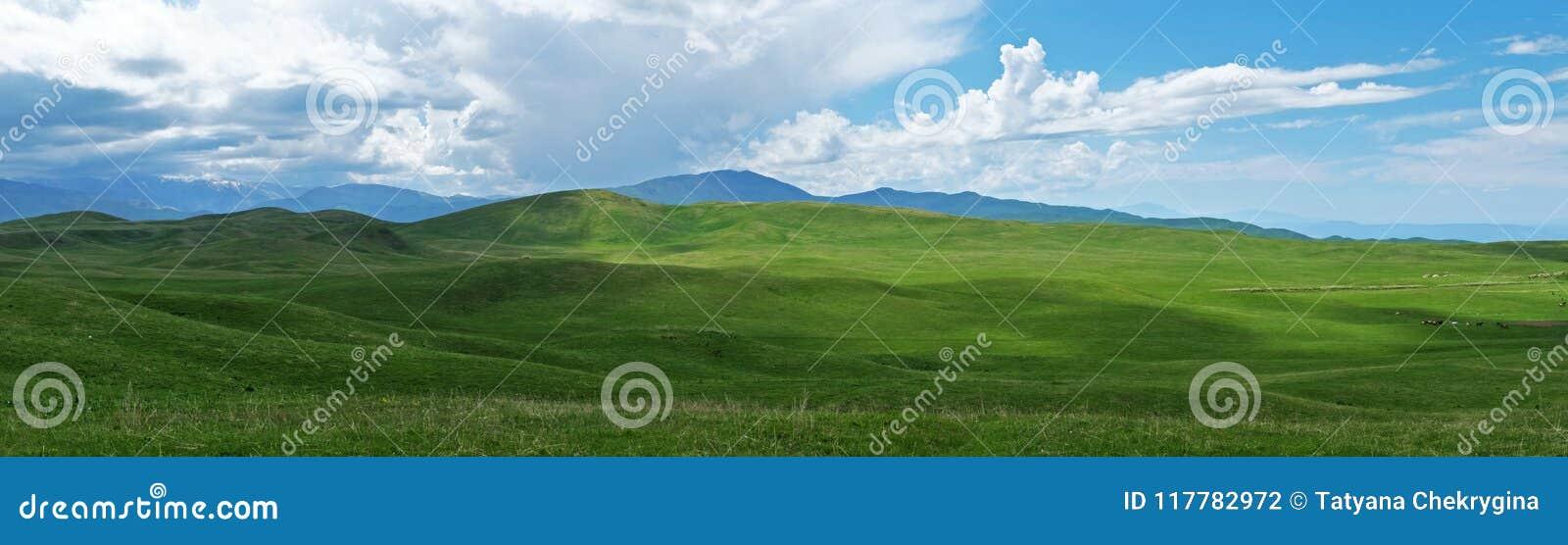 Panoramautsikt av härliga gröna kullar på solig dag