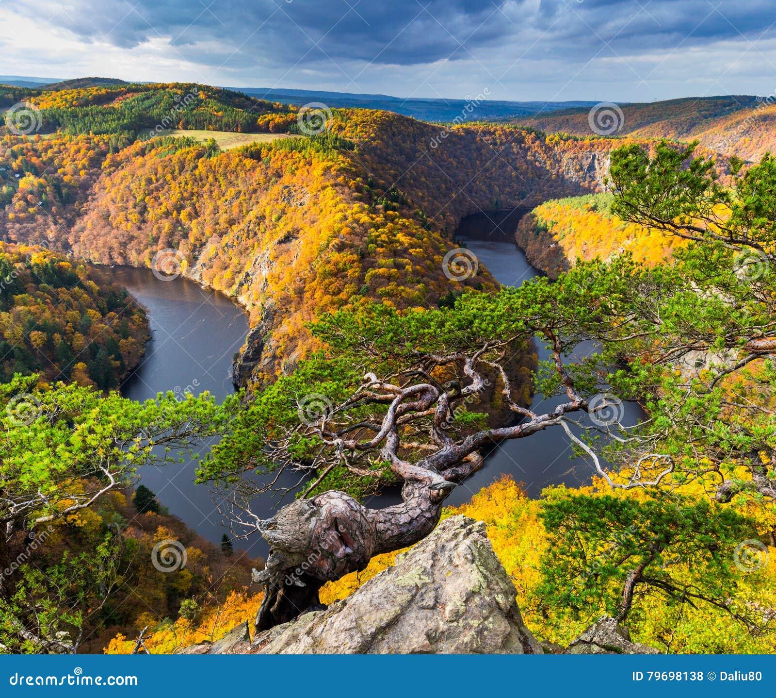 Panoramautsikten av flodkanjonen med mörkt vatten och den färgrika skoghästskon för höst böjer, den Vltava floden, Tjeckien härli